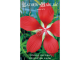 Hibiscus coccineus seeds