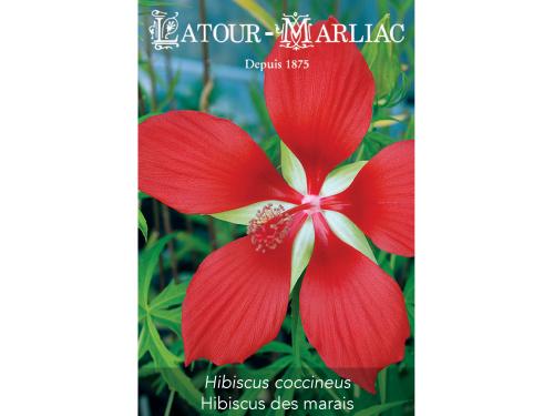Graines de Hibiscus coccineus