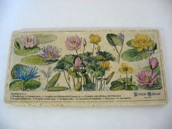 Plaque rectangulaire 'Plantes d'eau'