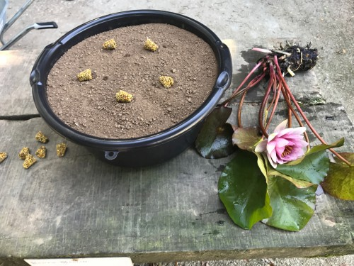 Pot 14L avec Substrat et Engrais pour les nénuphars