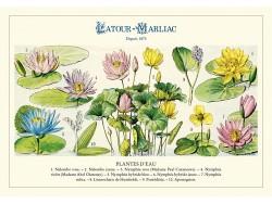 Carte postale 'Plantes d'eau fleuries'