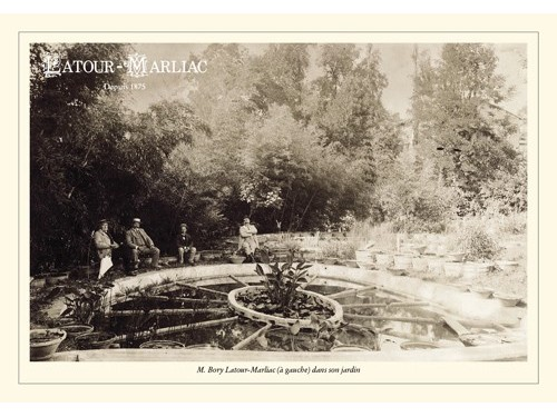 Post Card - 'Latour-Marliac at the Nursery'