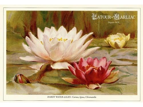 Carte postale 'Carnea, Ignea, Chromatella'
