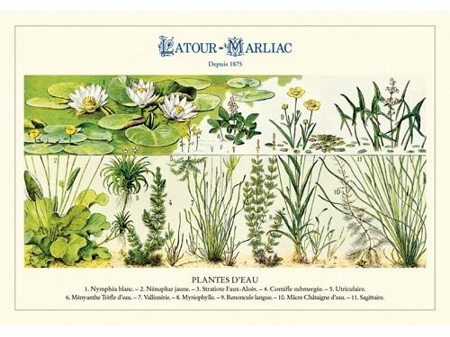 Carte postale 'Plantes d'eau'