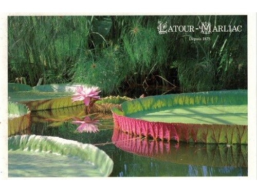Carte postale 'Victoria en fleur'