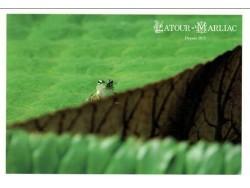 Carte postale 'Grenouille sur le Victoria'