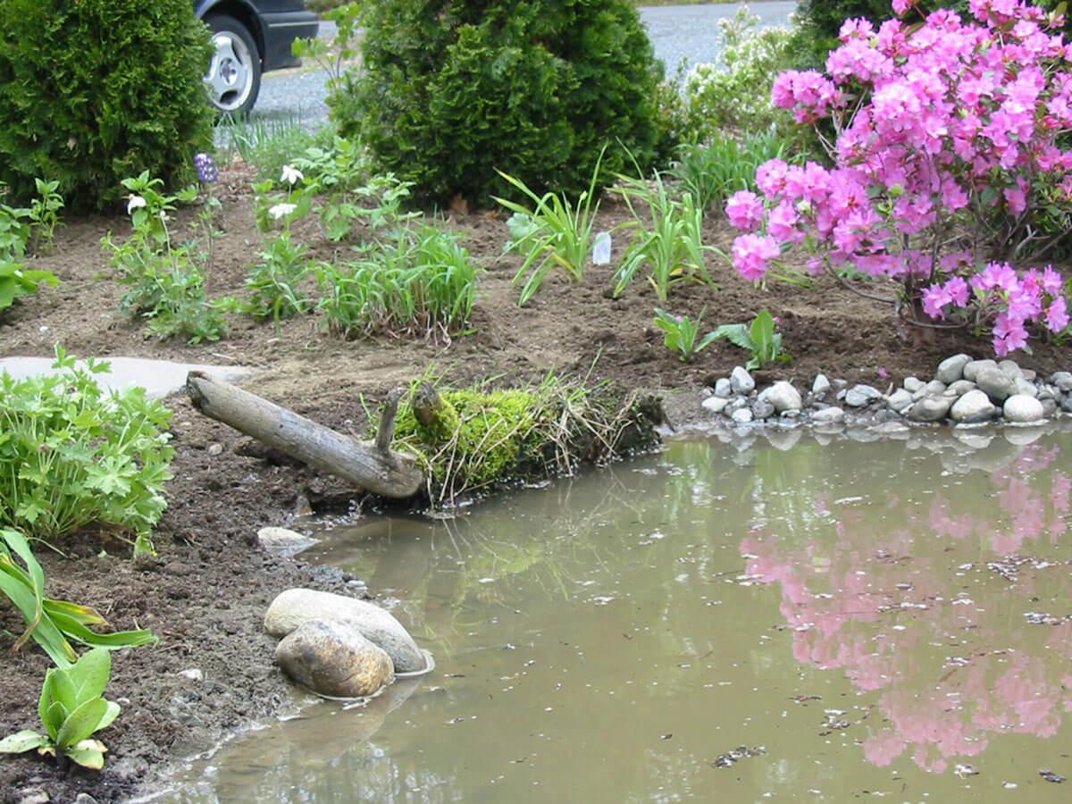 Nous avons utilisé une souche couverte de mousse pour créer une zone humide